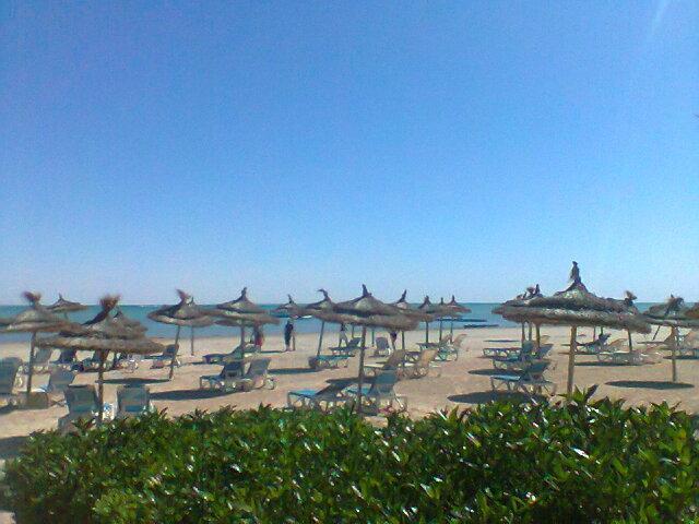 тунис отель браво джерба фото и отзывы