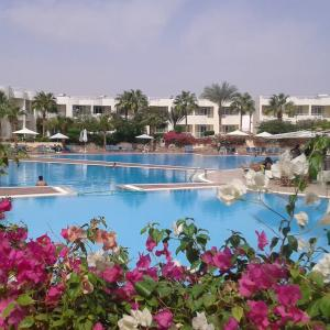 Sharm Reef Resort (4 *)