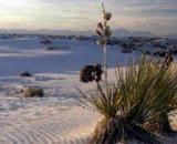 Best Western Desert Aire